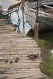 在docs的老,被放弃的渔船用鸭子 库存图片