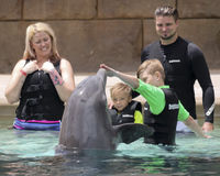 在Dolphinaris,亚利桑那的一个家庭,与海豚互动 库存图片