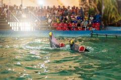 在dolphinarium的两只海豚 免版税库存照片