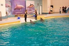在dolphinarium的海豚展示 免版税库存图片