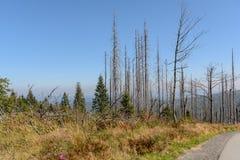 死在Dreisesselberg地区的森林 库存照片