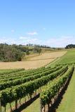 在Drouin和Warragul附近的葡萄园在维多利亚澳大利亚 库存照片