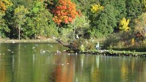 在Dufferin海岛的秋天秀丽 库存图片