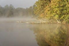 在Eagle湖的有雾的早晨 库存图片