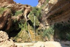 在Ein Gedi绿洲,以色列的大卫瀑布 免版税库存照片