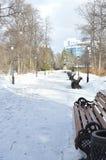 在Ekaterinburgs公园的树 图库摄影