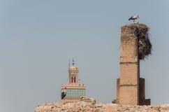 在El巴迪宫殿Palais El巴迪屋顶的鹳在马拉喀什, 免版税库存照片
