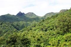 在El Yunque国家森林的Tres Picachos 免版税库存照片