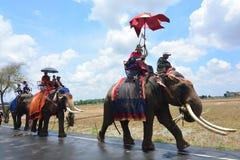 在Elephant's后面节日的整理游行 免版税图库摄影