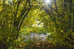 在Erft河的灌木 免版税库存照片