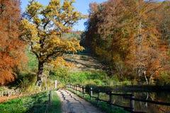 在Ermitage Arlesheim的中央湖的木桥 库存照片