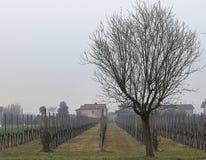 在Euganean小山地方公园,意大利的美好的风景 免版税库存照片