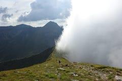 在Fagaras山的有雾的谷 库存图片