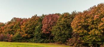 在fall& x27的五颜六色的叶子; s,秋天季节 免版税库存照片