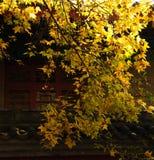 在famen寺庙一场面之外 图库摄影
