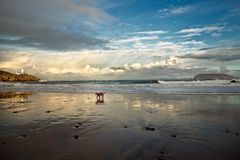 在Fanad海滩, Fanad, Co的小狗 Donegal, m爱尔兰 免版税库存照片