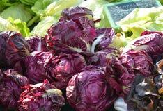 在farmer& x27的红叶卷心菜; s市场 库存照片