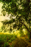 在farmfield途中的清早  免版税图库摄影