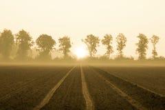在farmlife的早晨太阳 免版税图库摄影