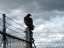 在fencepost的雕 图库摄影