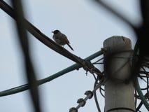 在fench的鸟 免版税图库摄影