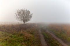 在fi结构树的唯一结构树在日出的域 免版税库存照片