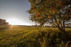 在fi结构树的唯一结构树在日出的域 免版税图库摄影