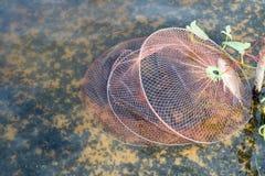 在fishcages的鱼 库存照片