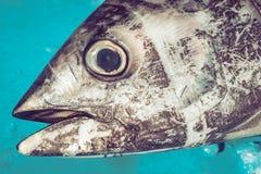 在fishmarket的金枪鱼头 库存照片