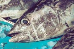 在fishmarket的金枪鱼头 免版税库存图片