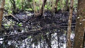 在Fl的低潮 沼泽地 影视素材