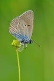 在flawer的蝴蝶 免版税库存照片