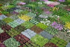 在Floraart暴露的花, 52国际性组织在湖Bundek的庭院陈列在萨格勒布 库存照片