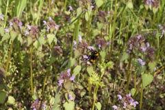 在flover的土蜂 免版税图库摄影