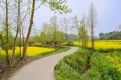 在floweirng春天下午的弯曲的乡下路 库存图片