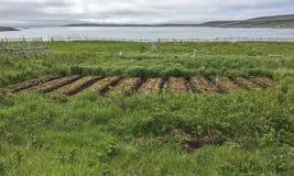 在Fogo海岛上的被上升的床庭院 免版税库存照片
