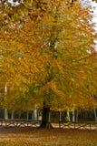 在Foresta本影的秋天, Gargano,意大利 免版税库存照片