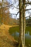 在Foresta本影的秋天, Gargano,意大利 库存照片