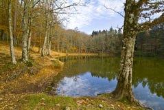 在Foresta本影的秋天, Gargano,意大利 库存图片