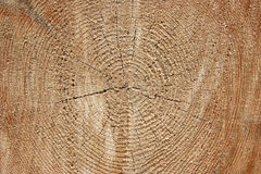 在foresty的击倒的树 免版税库存图片