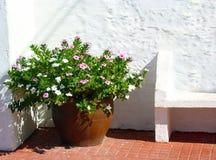 在Fornells街道的花卉装饰  免版税库存照片