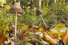 在forrest弗洛尔的蘑菇 免版税图库摄影