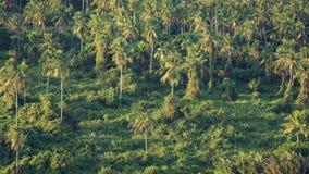 在forrest热带风景的椰子树 免版税图库摄影