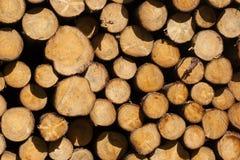 在forrest的荷兰人的被堆积的木材 免版税库存图片