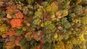 在forrest的鸟瞰图在秋天时间 库存照片