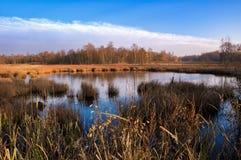 在Frantiskovy Lazne -捷克附近的自然保护区Soos 库存图片