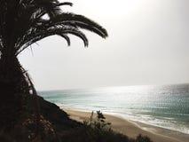 在Fuertaventura、海滩和棕榈的日落 免版税库存图片