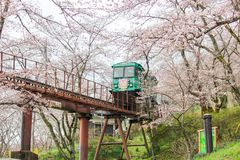 在Funaoka城堡废墟公园,柴田,宫城, Tohoku, April12,2017的日本的樱花节日:通过佐仓隧道的倾斜汽车 图库摄影