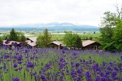 在Furano的美好的淡紫色领域 免版税库存照片