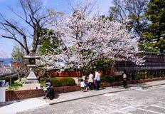 在Fushimi Inari寺庙的佐仓开花 免版税库存图片
